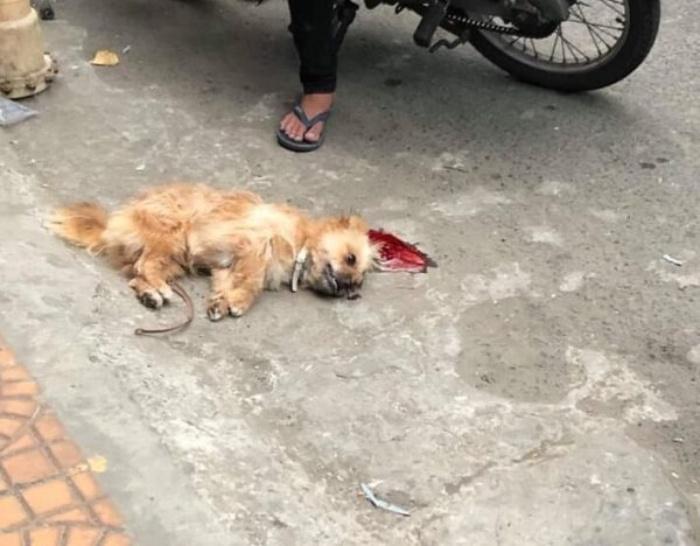 Mơ thấy con chó bị xe đạp đâm chết